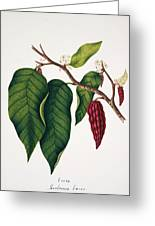 Chocolate Cocoa Plant Greeting Card