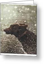 Chocolate Lab In Water Watercolor Portrait Greeting Card