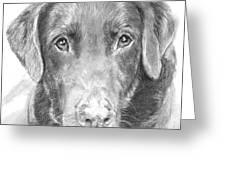 Chocolate Lab Sketched In Charcoal Greeting Card