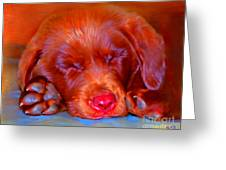 Chocolate Labrador Puppy Greeting Card by Iain McDonald