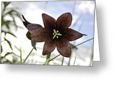Chocolate Liliy Greeting Card