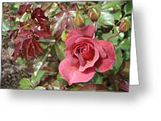 Chocolate Rose Greeting Card by James Hammen