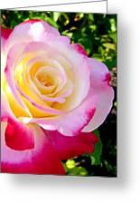 Choice Garden Rose Greeting Card