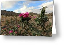 Cholla Cactus Blooming In The Sandia Foothills Greeting Card