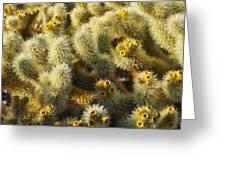 Cholla Cactus Garden Mirage Greeting Card