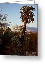Cholla Cactus View Greeting Card