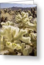 Cholla (cylindropuntia Bigelovii) Cactus Greeting Card