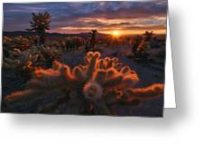 Cholla Garden Greeting Card