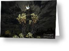 Cholla Light - Joshua Tree National Park Greeting Card