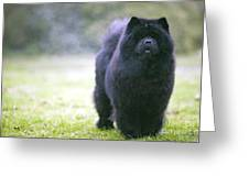 Chow Chow Dog Greeting Card