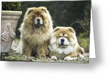 Chow Chow Dogs Greeting Card