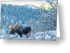 Christie Moose Greeting Card