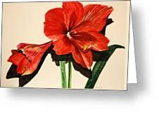 Christmas Amaryllis Greeting Card