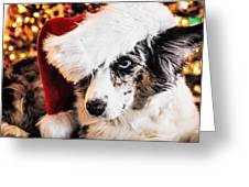 Christmas Cardigan Greeting Card