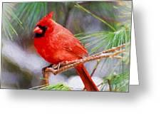 Christmas Cardinal - Male Greeting Card