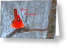 Christmas Red Cardinal Greeting Card