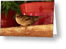 Christmas Finch Greeting Card