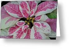 Christmas Floral Greeting Card
