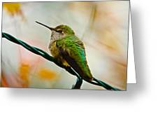 Christmas Humming Bird Greeting Card