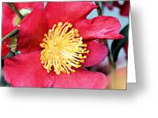Christmas In A Flower Greeting Card