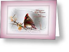 Christmas In Pink - Cardinal Christmas Greeting Card