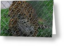 Christmas Leopard I Greeting Card