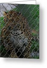 Christmas Leopard II Greeting Card