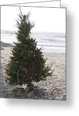 Christmas On The Beach 1 Greeting Card