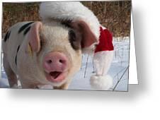 Christmas Pig Greeting Card