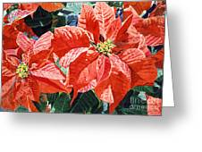 Christmas Poinsettia Magic Greeting Card
