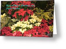 Christmas Poinsettias  Greeting Card