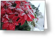 Christmas Poinsettia Flowers Greeting Card