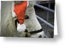 Christmas Pony Greeting Card