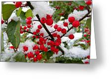 Christmas Snow Greeting Card