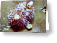 Christmas Tree Worms 1 Greeting Card