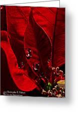 Christmas Velvet Greeting Card