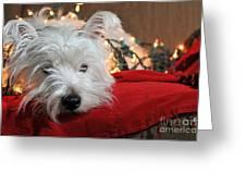 Christmas Westie Greeting Card