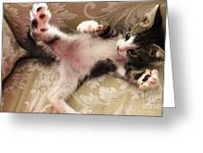 Christopher Paws Up Greeting Card