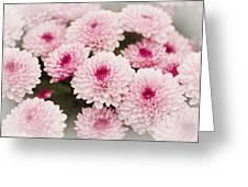 Chrysantemum Pink Greeting Card