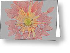 Chrysanthemum As Coloured Pencil Drawing Greeting Card