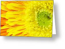Chrysanthemum Flower Closeup Greeting Card