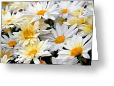 Chrysanthemum Flowers 4 Greeting Card