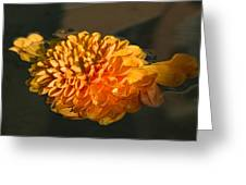 Chrysanthemum Gently Floating In The Fountain Of Campo De Fiori - Rome - Italy Greeting Card