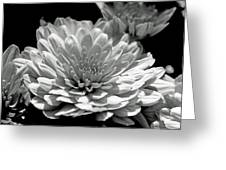 Chrysanthemum In Light And Shadow Greeting Card