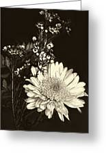 Chrysanthimum Greeting Card