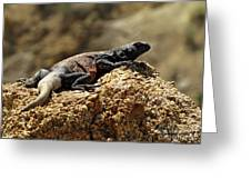 Chucka Walla Basking Greeting Card