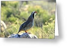 Chukar Crow Greeting Card