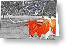 Cibolo Longhorn Greeting Card
