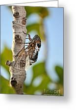 Cicada On Fig Tree Greeting Card