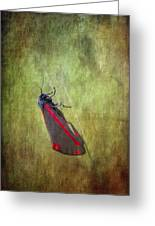 Cinnabar Moth Art Texture Wall Decor. Greeting Card